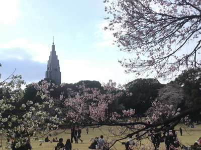 新宿御苑_NTTドコモ代々木ビル