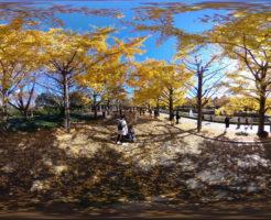 国営昭和記念公園_360度パノラマ写真